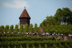 Giro del vino nel rkheim del ¼ di Obertà vicino a Stuttgart, Germania Fotografia Stock