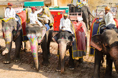 Giro dell'elefante in India Fotografie Stock