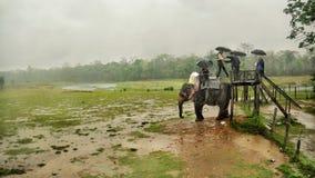 Giro dell'elefante nella pioggia fotografia stock