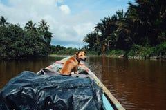 Giro della canoa sul fiume che entra in profondità in foresta pluviale con luoghi fotografia stock libera da diritti