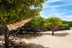Giro della mangrovia Fotografie Stock