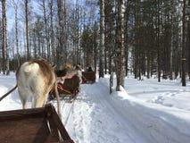 Giro della slitta della renna in Lapponia finlandese alla fine del marzo 2018 Fotografia Stock
