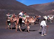 Giro della traccia del cammello, Lanzarote Fotografia Stock