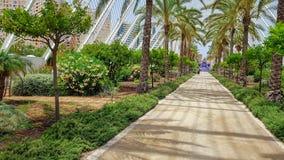 Giro delle sulle vie ripiene di palma a Valencia spagna fotografie stock
