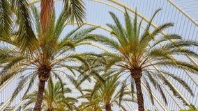 Giro delle sulle vie ripiene di palma a Valencia spagna fotografia stock libera da diritti