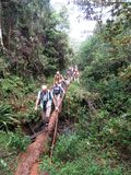 Giro di Birding nel Madagascar fotografie stock