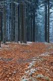 Giro di legno Fotografie Stock