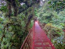 Giro di Trekkin in Monteverde fotografia stock