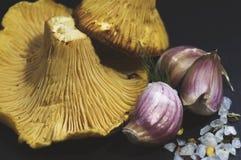 Girolle cantharellus mushrooms, sea salt and garlic on black background. Closeup Royalty Free Stock Photos
