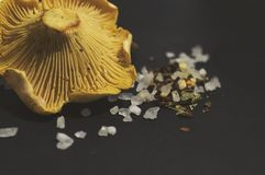 Girolle cantharellus mushrooms, sea salt and spices on black background. Closeup Stock Photography