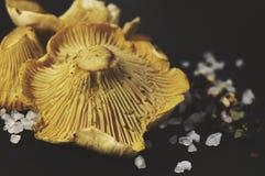 Girollecantharellusen plocka svamp, det salta havet och kryddor på svart bakgrund Royaltyfri Bild