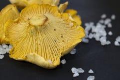 Girollecantharellusen plocka svamp och salt svart bakgrund för havet Arkivbild