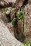 Girraween National Park royalty free stock photos