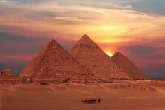 Giseh-Pyramiden Stockbilder