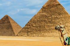 Giseh-Pyramiden stockfotos