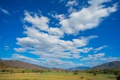 Gisement d'ail avec le ciel bleu Images libres de droits