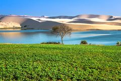 Gisement d'arachide par Lotus Lake - Bau Trang aux dunes de sable blanches en Mui Ne, Phan Thiet, Binh Thuan Province, Vietnam photo libre de droits