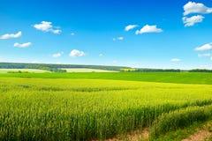 Gisement de blé de mars et ciel bleu d'espace libre Photo stock