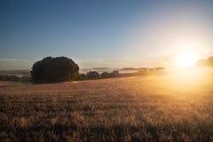 Gisement de céréale au coucher du soleil Image libre de droits
