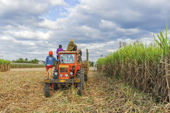 Gisement de canne à sucre, province de Tay Ninh, Vietnam Photo libre de droits