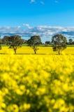 Gisement de Canola dans l'Australie Photos stock