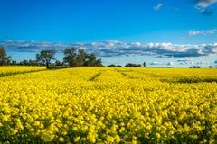 Gisement de Canola dans l'Australie Photographie stock