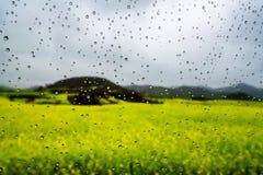 Gisement de Canola, gisement de fleur de graine de colza avec la baisse de pluie Photo stock