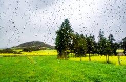 Gisement de Canola, gisement de fleur de graine de colza avec la baisse de pluie Photos libres de droits