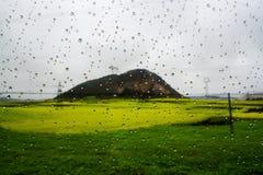 Gisement de Canola, gisement de fleur de graine de colza avec la baisse de pluie Photos stock