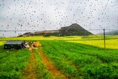 Gisement de Canola, gisement de fleur de graine de colza avec la baisse de pluie Photographie stock libre de droits