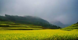 Gisement de Canola, gisement de fleur de graine de colza avec la brume dans Luoping Photographie stock libre de droits