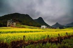 Gisement de Canola, gisement de fleur de graine de colza avec la brume dans Luoping Image libre de droits