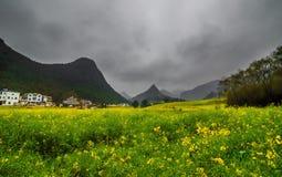 Gisement de Canola, gisement de fleur de graine de colza avec la brume dans Luoping Photos libres de droits