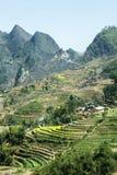 Gisement de Canola sur la montagne des minorités ethniques photos stock