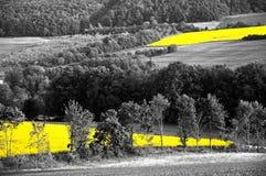Gisement de colza oléagineux Image libre de droits