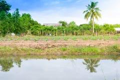 Gisement de concombre s'élevant avec le système d'irrigation par égouttement Photographie stock libre de droits