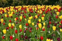 Gisement de fleur image libre de droits