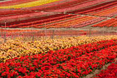 Gisement de fleur photo stock