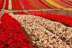 Gisement de fleur photos libres de droits
