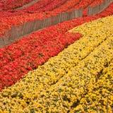 Gisement de fleur image stock