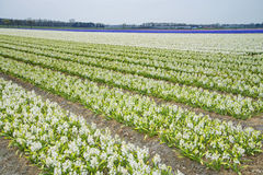 Gisement de fleur Photographie stock libre de droits