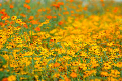 Gisement de fleur Photos stock