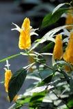 Gisement de fleur blanche jaune Images stock