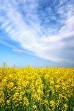 Gisement de fleur de jaune de ressort d'été Image libre de droits