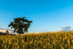 Gisement de fleur jaune Photo libre de droits