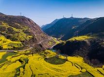 Gisement de fleur jaune de canola de graine de colza au printemps, Luoping, Chine images stock