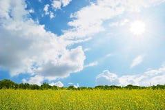 Gisement de fleur jaune, ciel bleu et soleil. Photographie stock libre de droits