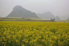 Gisement de fleur jaune de graine de colza avec la brume image stock
