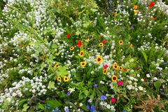 Gisement de fleur sauvage photo libre de droits