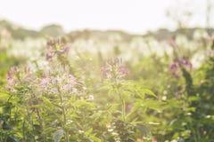 Gisement de fleurs Photo stock